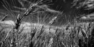 Le Puglie, storie di terre e di vini – di Anna Gennari